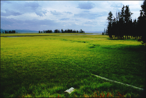 green fields with a stormy sky in Yellowstone, Wyoming
