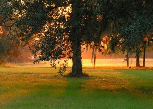 sunlight behind a live oak tree in southern georgia