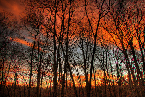 orange clouds behind the silhouettes of trees in guilford connecticut