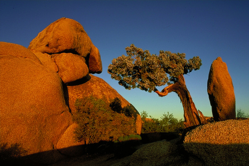 Joshua Tree National Park, near San Diego