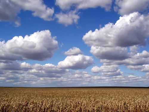 Clouds and Corn by Kables at flickr