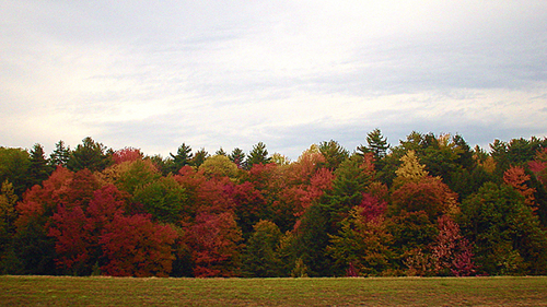 Fall colors in VE by VJ fliks at flickr