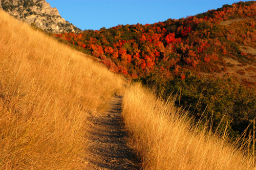 Mountain Trail by a4gpa at flickr